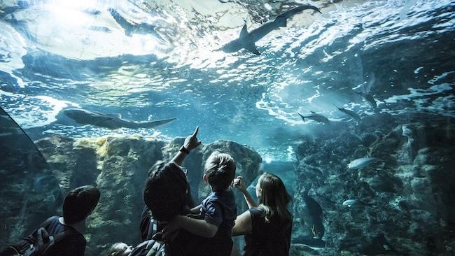 Pavillon Tropical bassin requins Oceanopolis