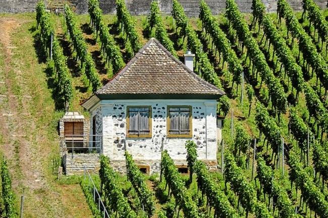 œnotourisme pour les amateurs de vin